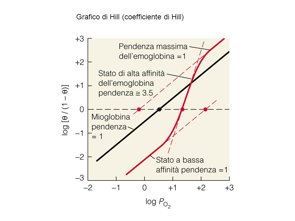 Grafico di Hill (coefficiente di Hill)