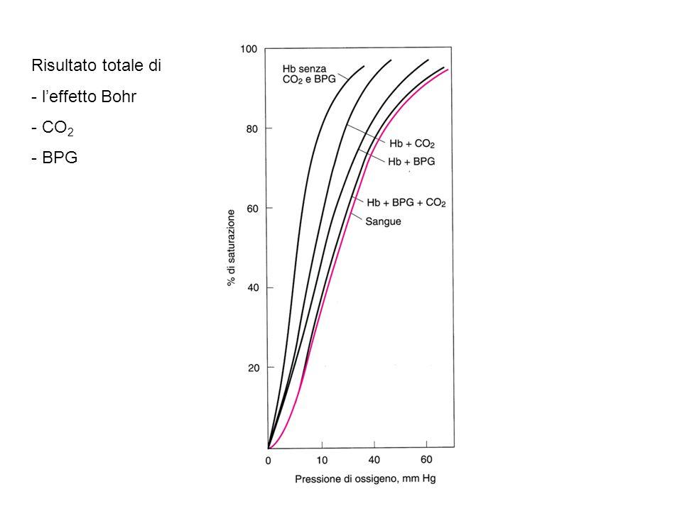Risultato totale di l'effetto Bohr CO2 BPG