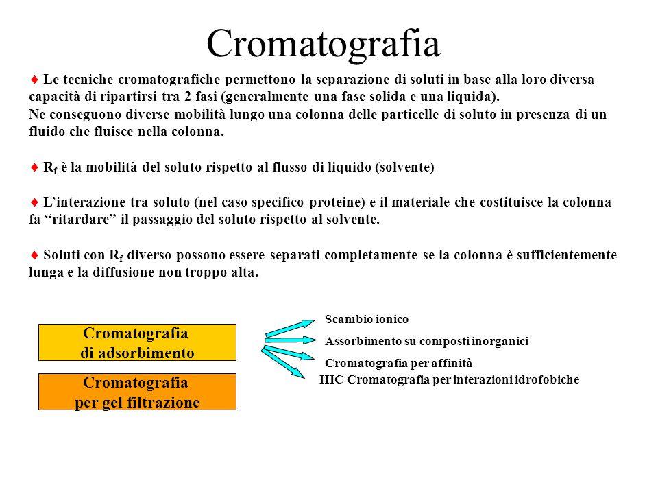 Cromatografia Cromatografia di adsorbimento Cromatografia