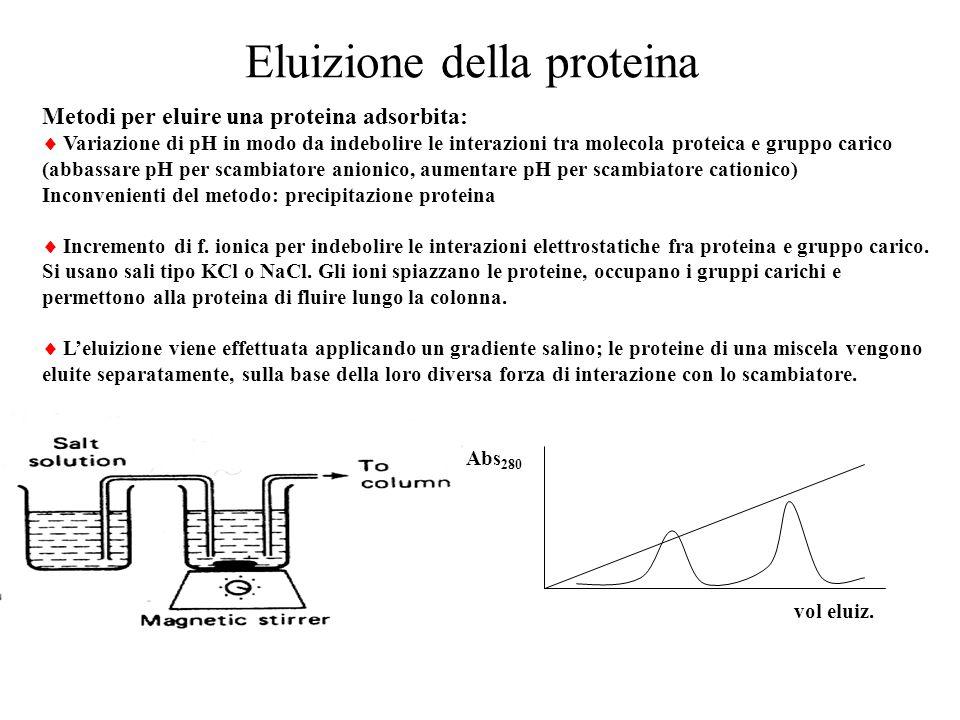 Eluizione della proteina