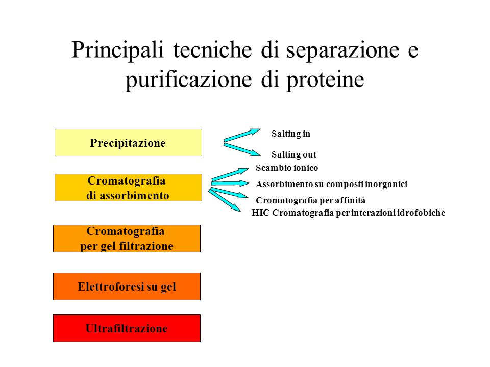 Principali tecniche di separazione e purificazione di proteine