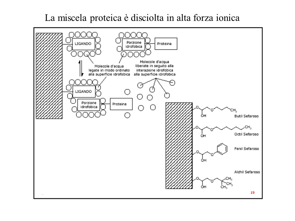 La miscela proteica è disciolta in alta forza ionica