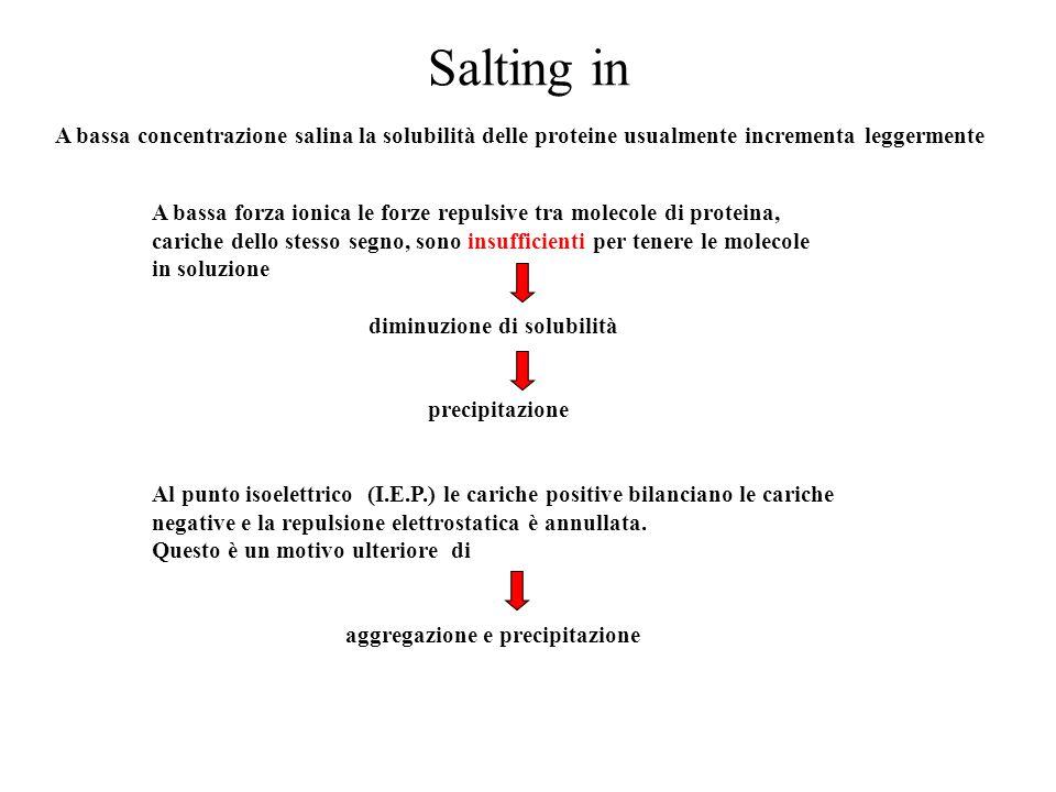 Salting in A bassa concentrazione salina la solubilità delle proteine usualmente incrementa leggermente.
