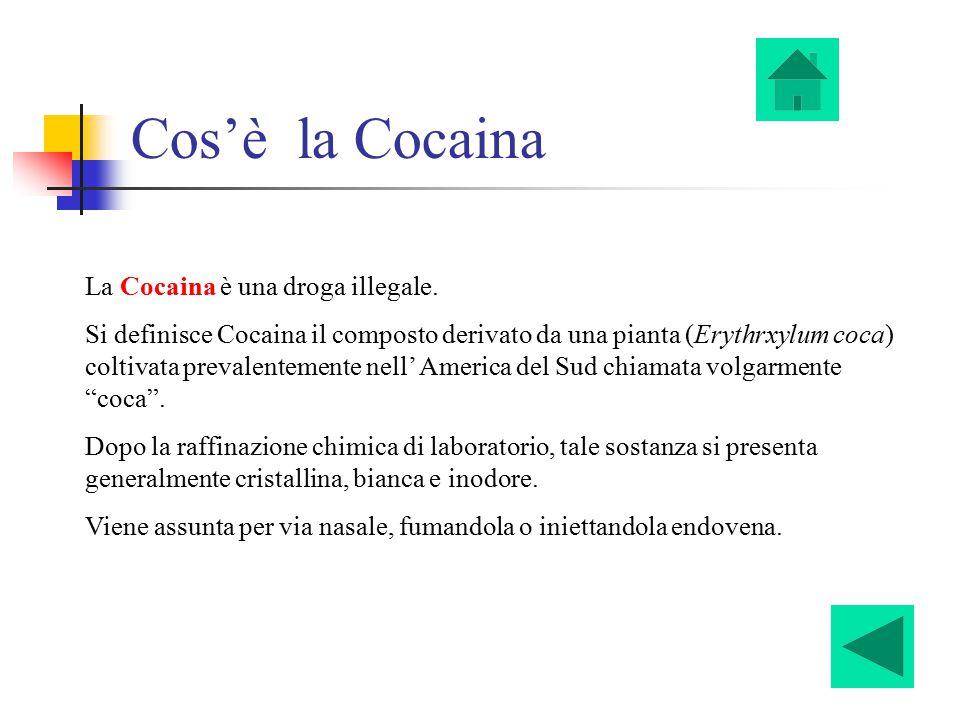 Cos'è la Cocaina La Cocaina è una droga illegale.