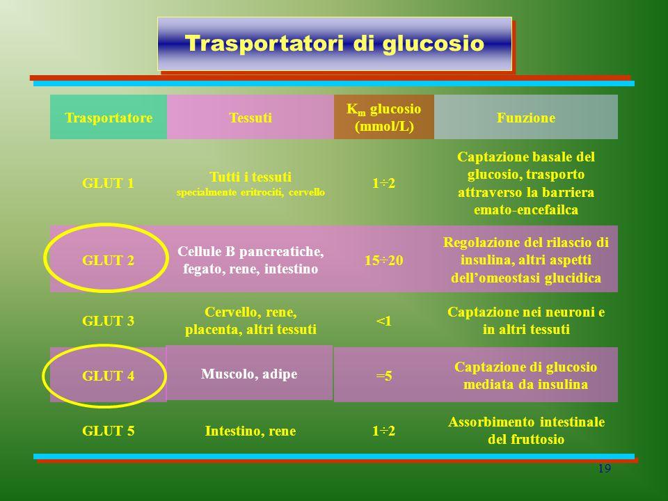 Trasportatori di glucosio