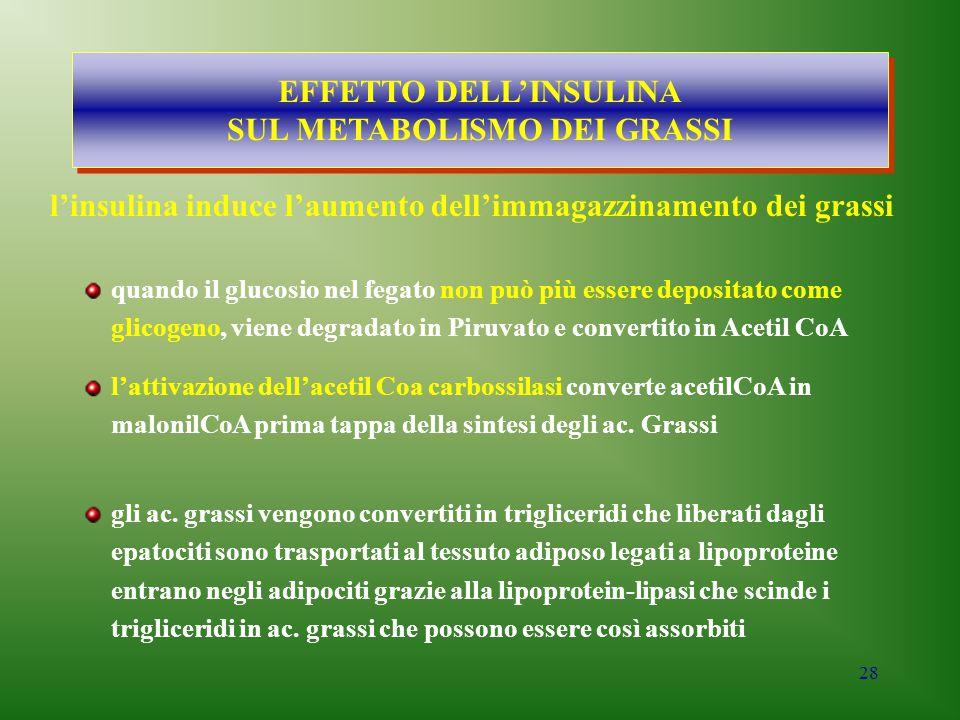 EFFETTO DELL'INSULINA SUL METABOLISMO DEI GRASSI