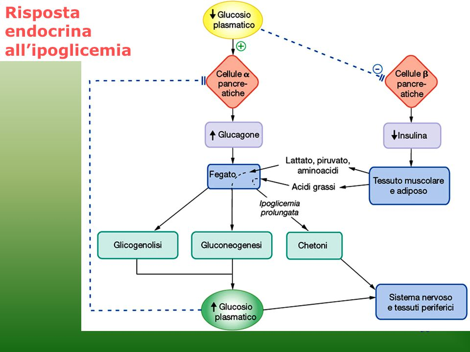 Risposta endocrina all'ipoglicemia