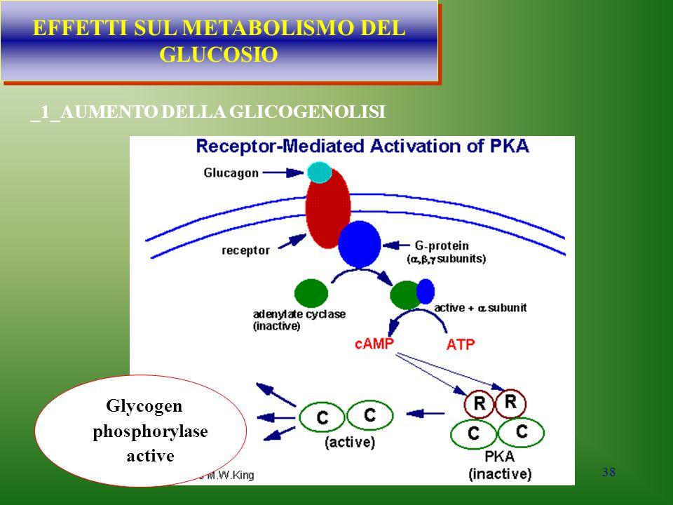 EFFETTI SUL METABOLISMO DEL GLUCOSIO Glycogen phosphorylase active