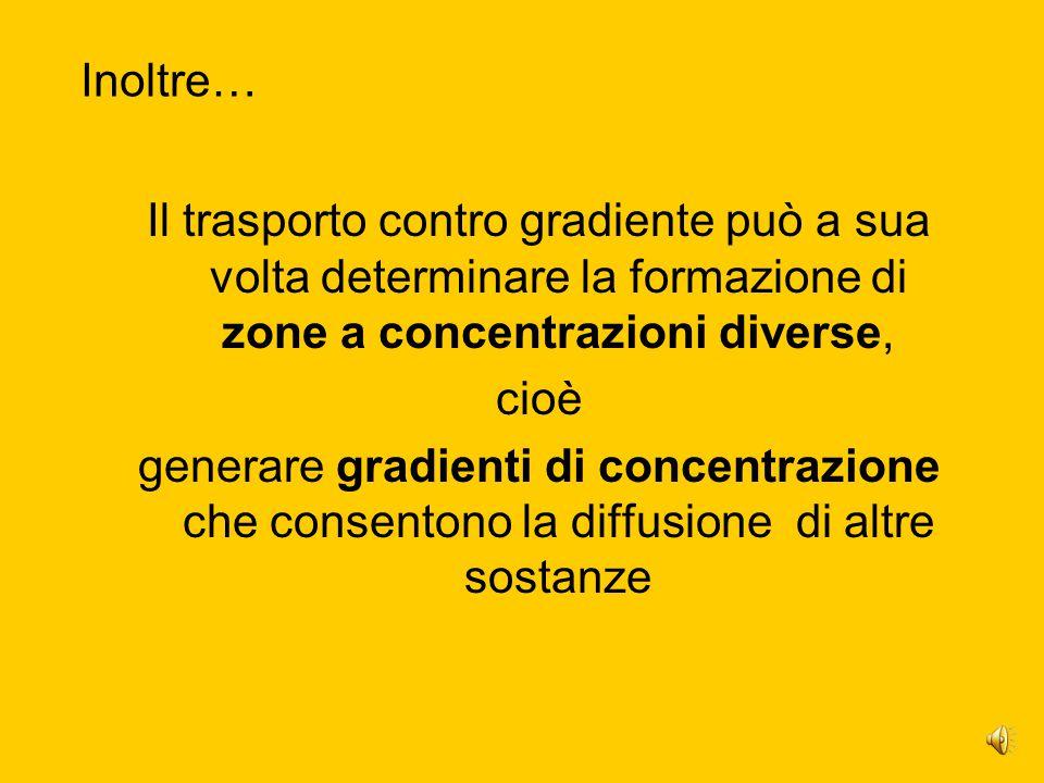 Inoltre… Il trasporto contro gradiente può a sua volta determinare la formazione di zone a concentrazioni diverse,
