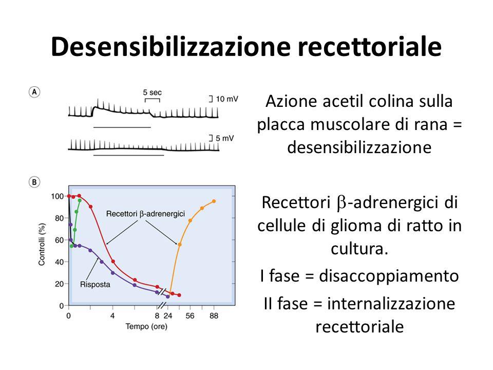 Desensibilizzazione recettoriale