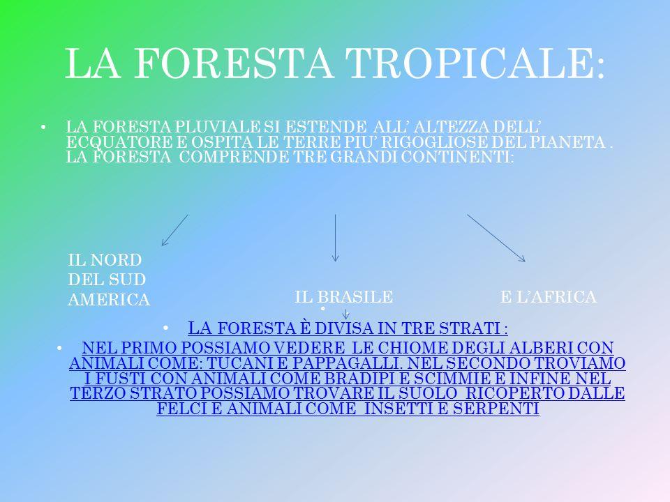 LA FORESTA È DIVISA IN TRE STRATI :