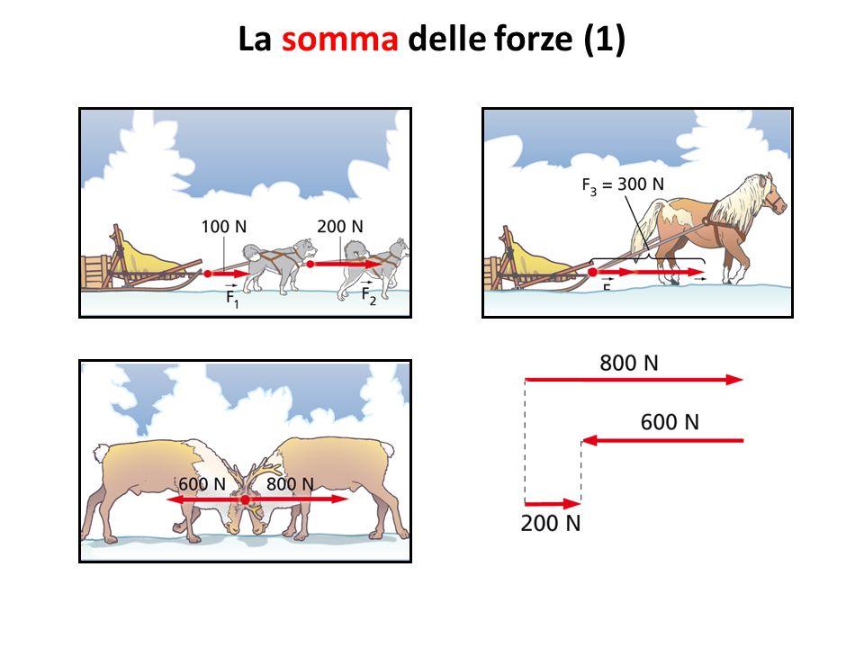 La somma delle forze (1) Come si sommano due forze parallele e discordi, come quelle esercitate dalle due renne