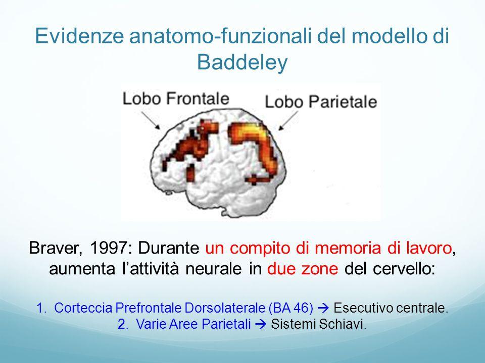Evidenze anatomo-funzionali del modello di Baddeley
