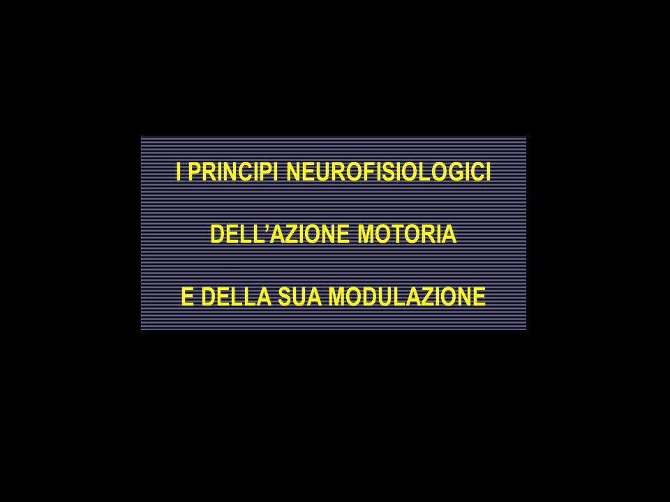 I PRINCIPI NEUROFISIOLOGICI E DELLA SUA MODULAZIONE