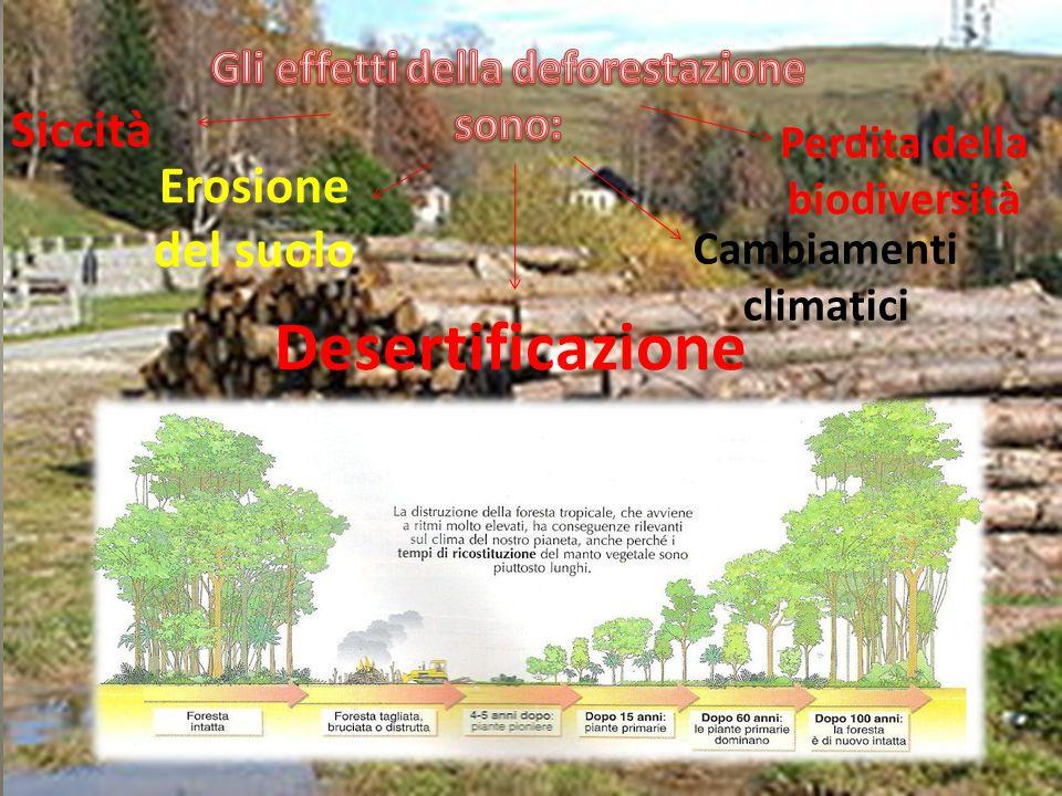 Gli effetti della deforestazione Cambiamenti climatici