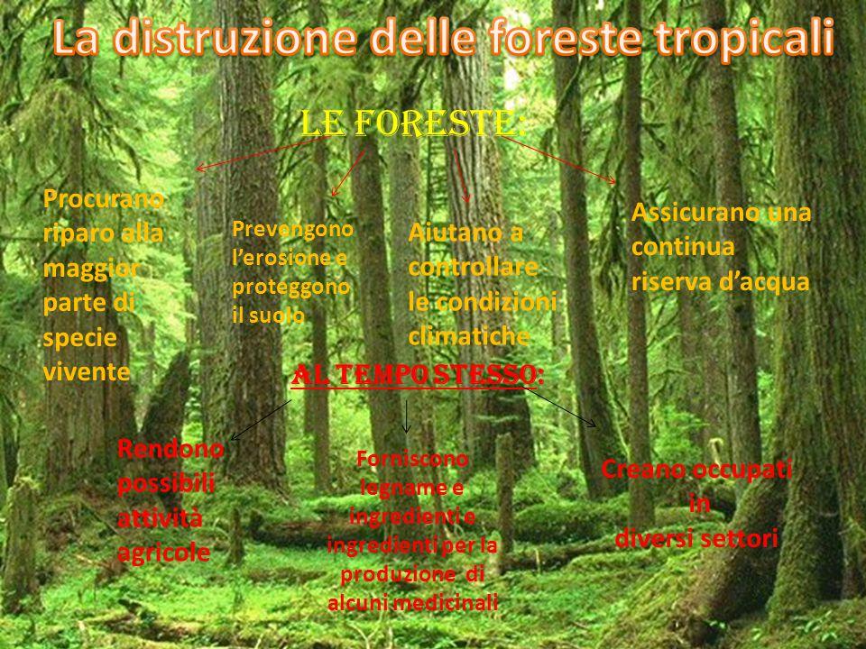 La distruzione delle foreste tropicali