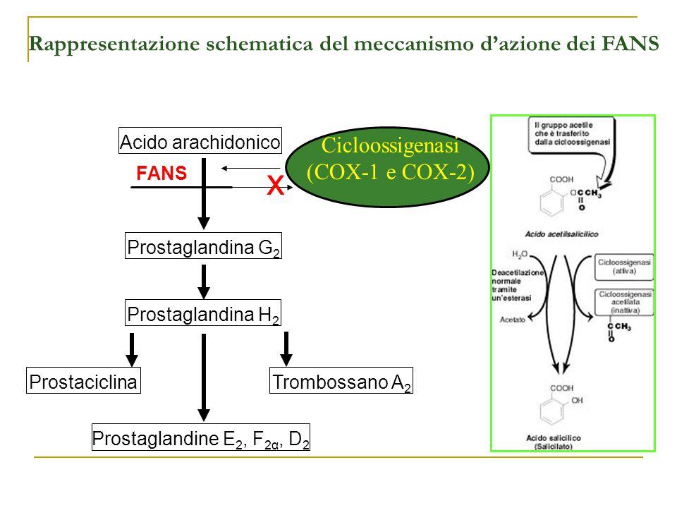 Rappresentazione schematica del meccanismo d'azione dei FANS