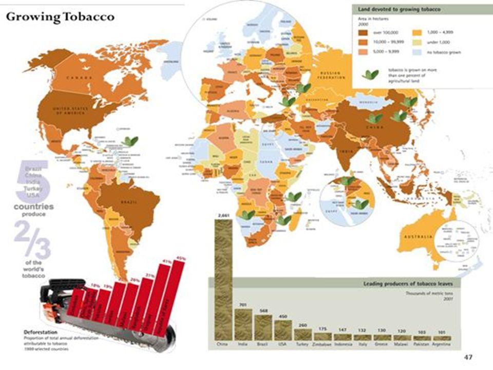 TABACCO Il tabacco è un prodotto agricolo, ottenuto dalle foglie delle piante del genere nicotiana, di cui esistono molte specie.