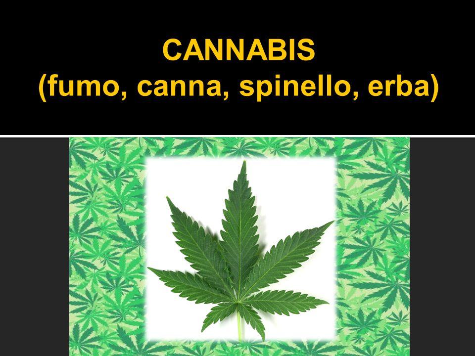 (fumo, canna, spinello, erba)