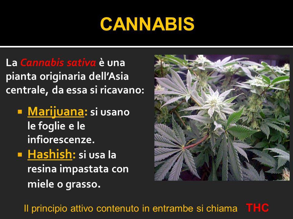 Il principio attivo contenuto in entrambe si chiama THC
