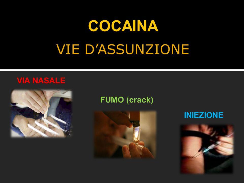 COCAINA VIE D'ASSUNZIONE VIA NASALE FUMO (crack) INIEZIONE VIA NASALE