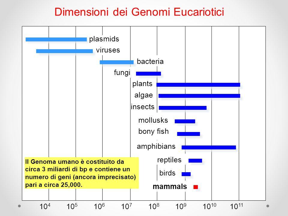 Dimensioni dei Genomi Eucariotici