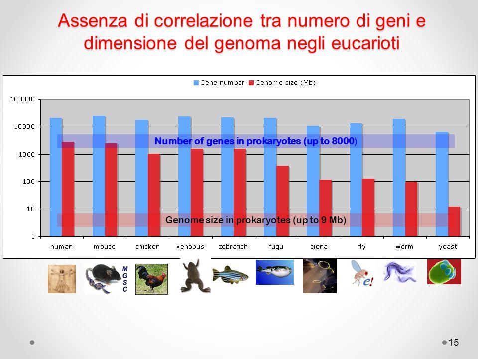 Assenza di correlazione tra numero di geni e dimensione del genoma negli eucarioti
