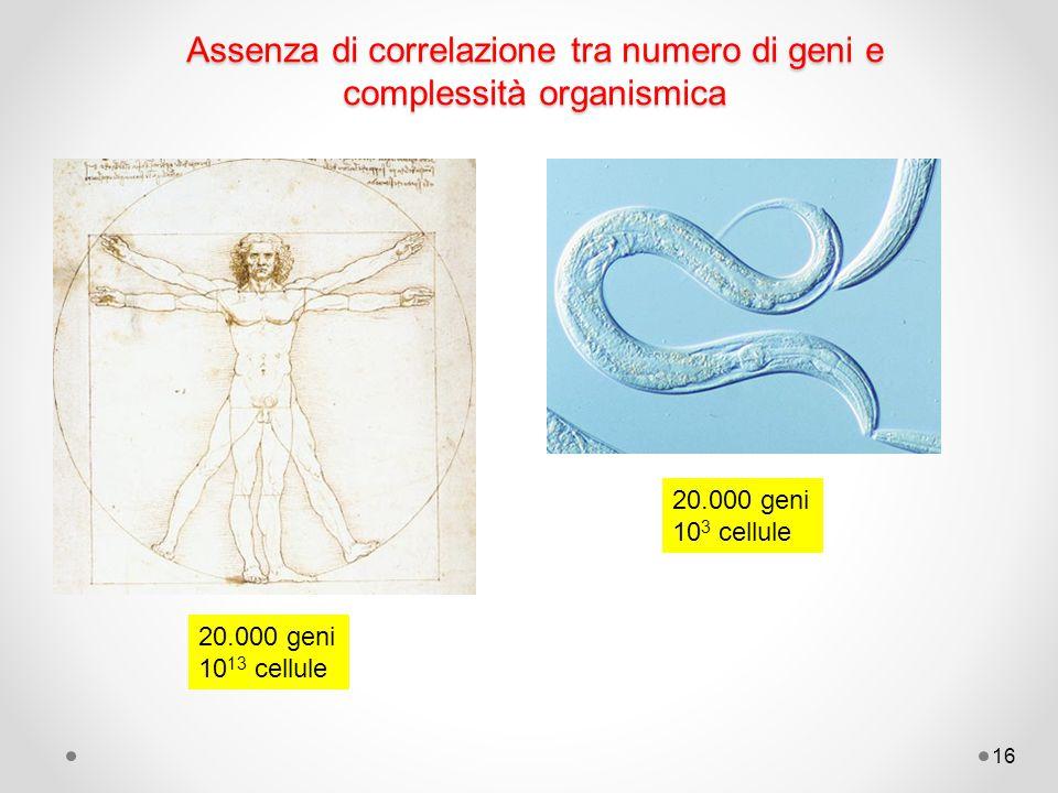 Assenza di correlazione tra numero di geni e complessità organismica