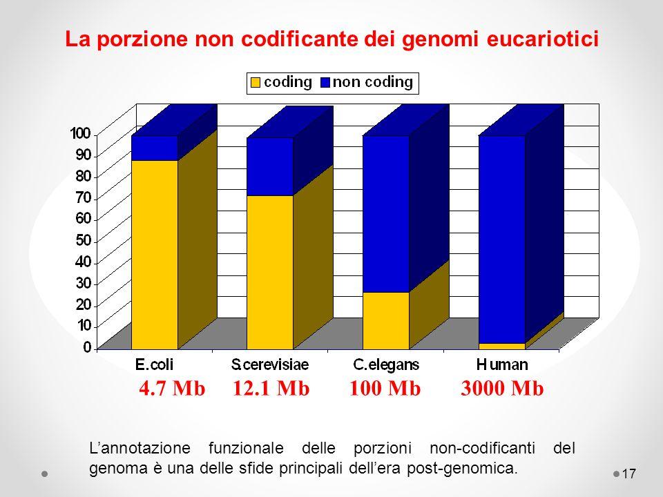La porzione non codificante dei genomi eucariotici