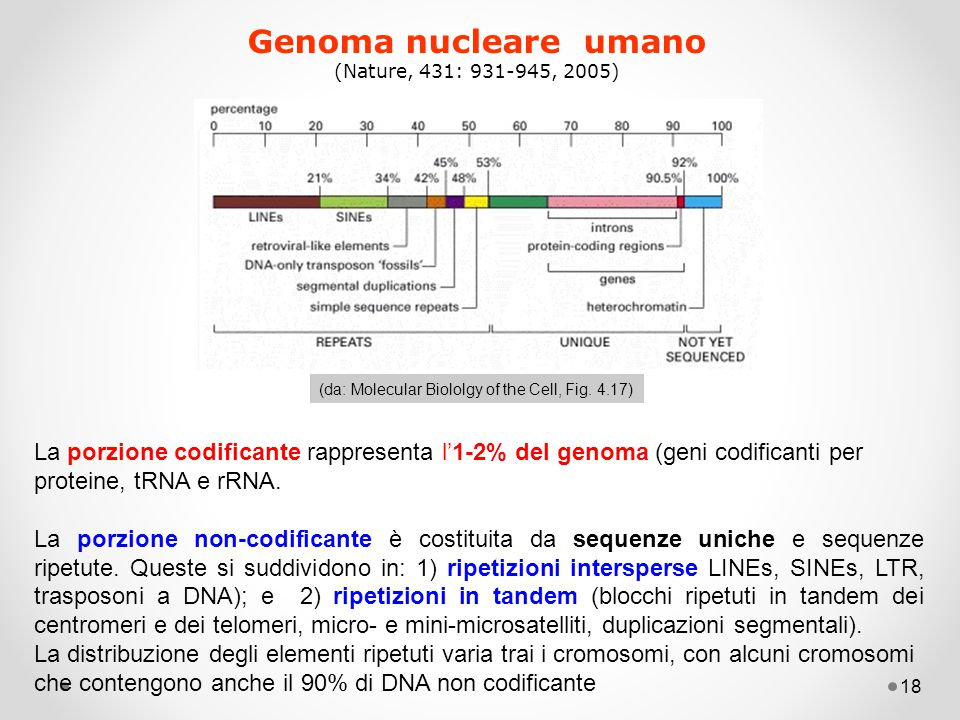 Genoma nucleare umano (Nature, 431: 931-945, 2005) (da: Molecular Biololgy of the Cell, Fig. 4.17)