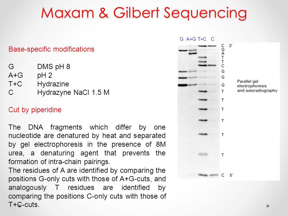 Maxam & Gilbert Sequencing