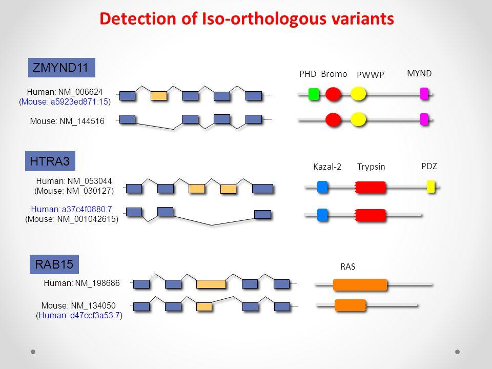 Detection of Iso-orthologous variants