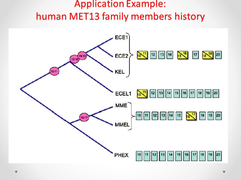 Application Example: human MET13 family members history