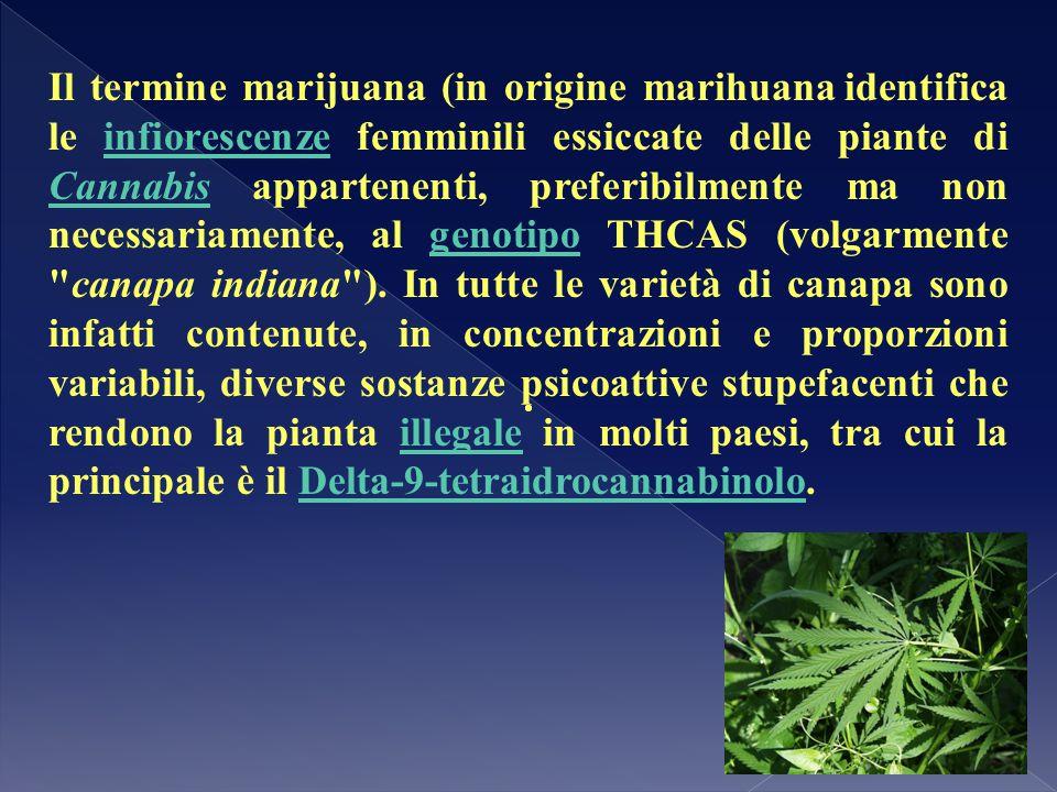 Il termine marijuana (in origine marihuana identifica le infiorescenze femminili essiccate delle piante di Cannabis appartenenti, preferibilmente ma non necessariamente, al genotipo THCAS (volgarmente canapa indiana ). In tutte le varietà di canapa sono infatti contenute, in concentrazioni e proporzioni variabili, diverse sostanze psicoattive stupefacenti che rendono la pianta illegale in molti paesi, tra cui la principale è il Delta-9-tetraidrocannabinolo.