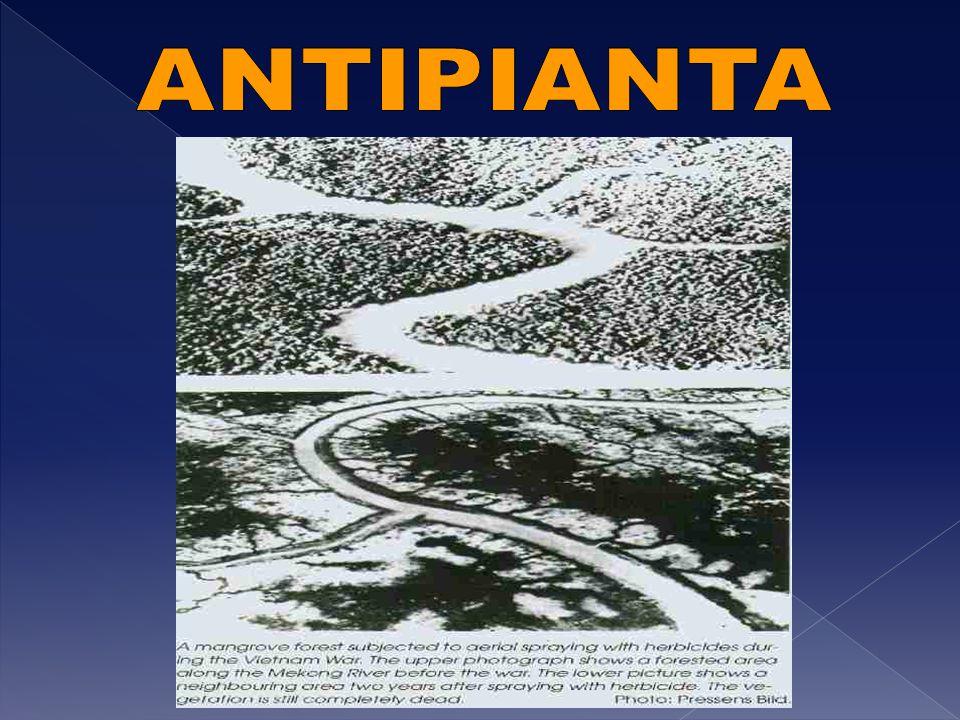 ANTIPIANTA