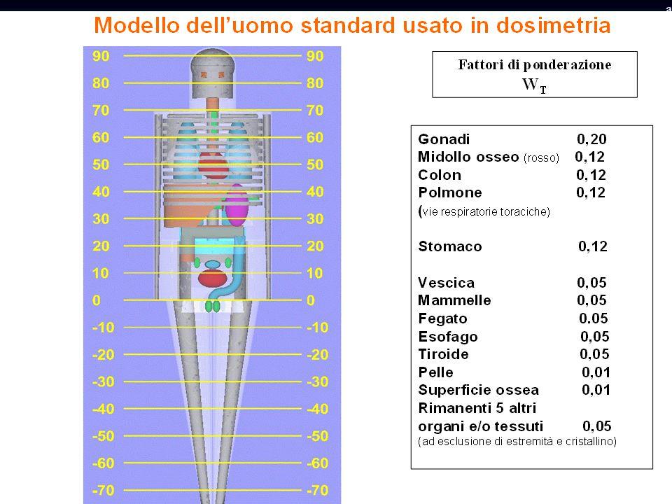 Fattori di ponderazione degli organi
