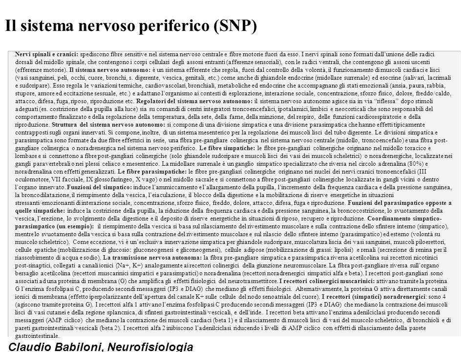 Il sistema nervoso periferico (SNP)