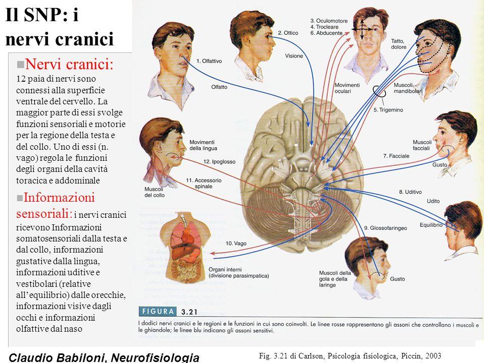 Fig. 3.21 di Carlson, Psicologia fisiologica, Piccin, 2003