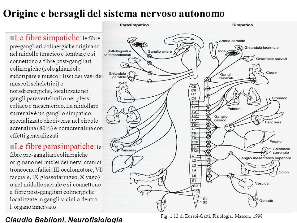 Origine e bersagli del sistema nervoso autonomo