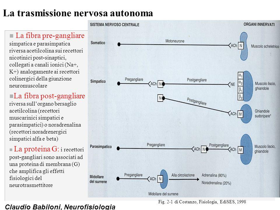 La trasmissione nervosa autonoma