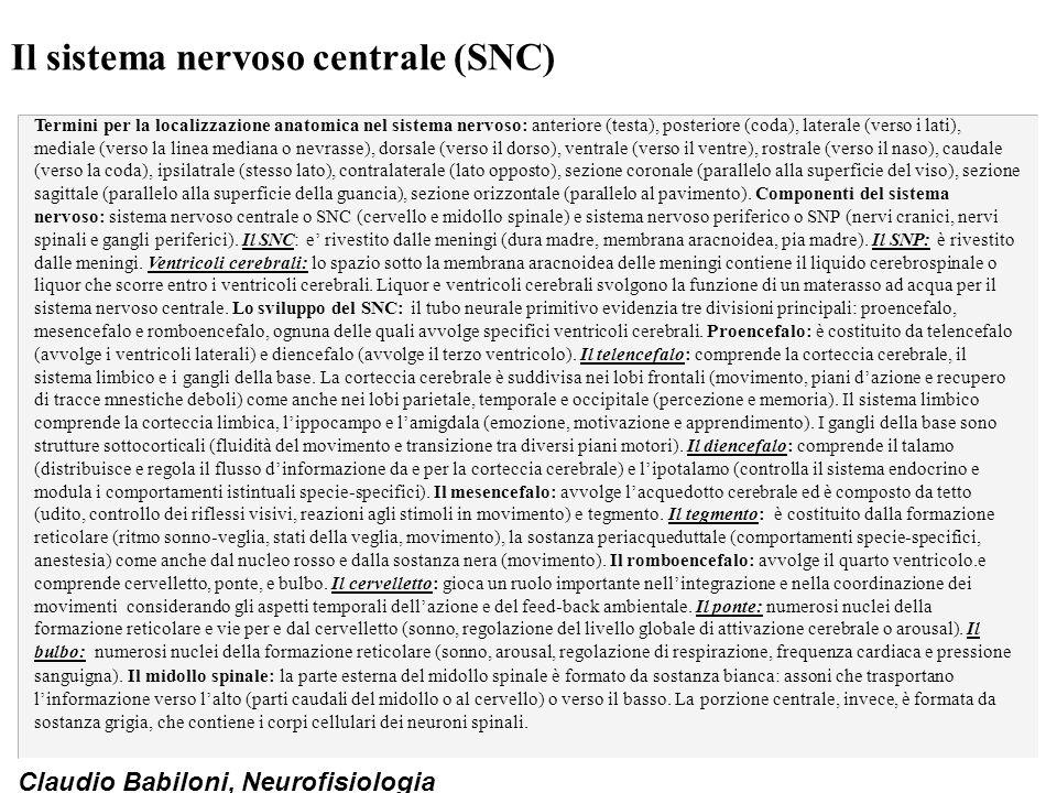 Il sistema nervoso centrale (SNC)