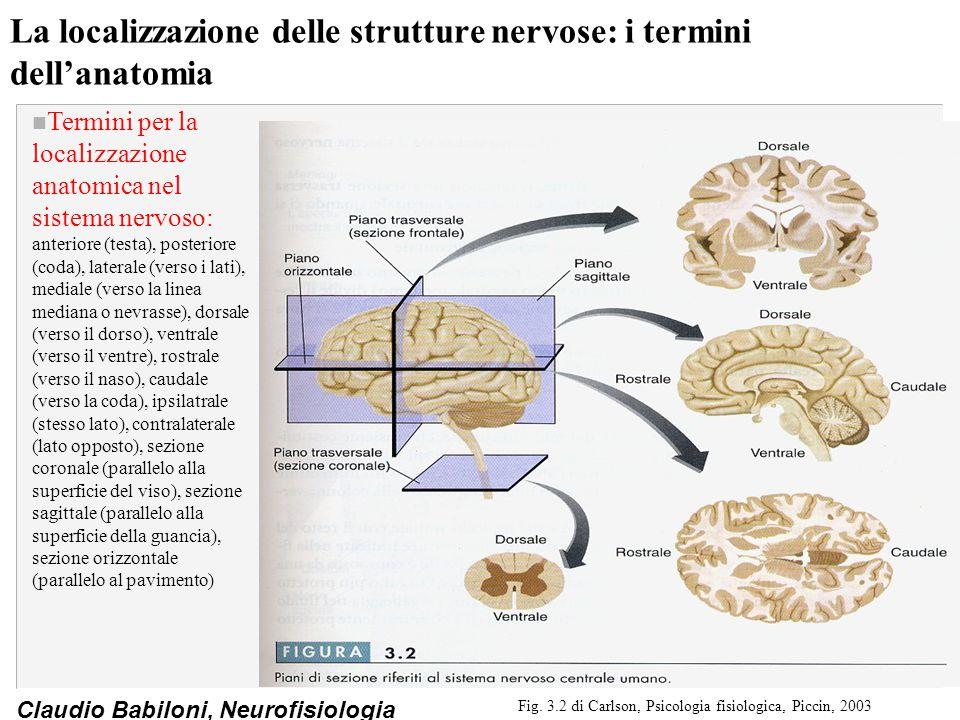 La localizzazione delle strutture nervose: i termini dell'anatomia