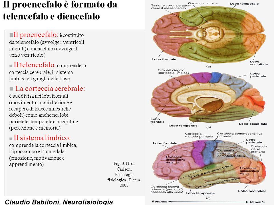 Il proencefalo è formato da telencefalo e diencefalo