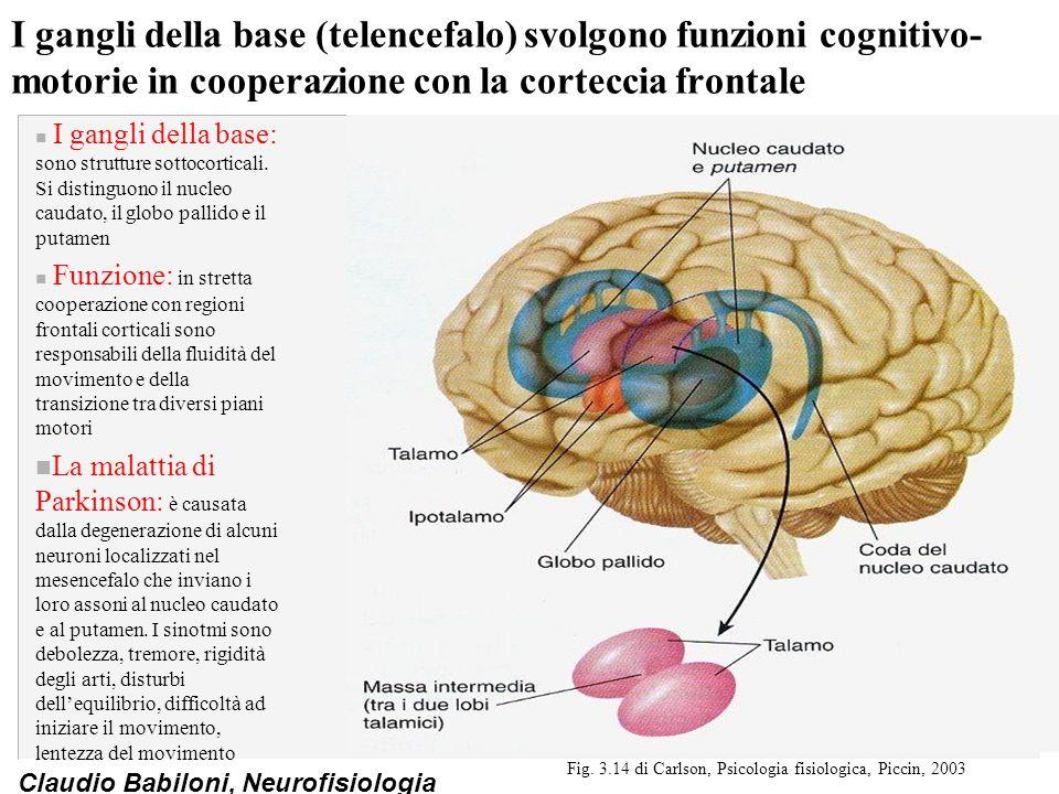 Fig. 3.14 di Carlson, Psicologia fisiologica, Piccin, 2003