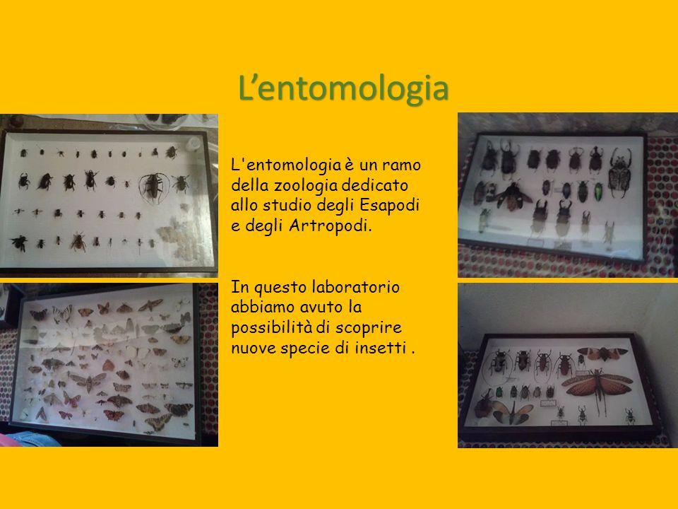 L'entomologia L entomologia è un ramo della zoologia dedicato allo studio degli Esapodi e degli Artropodi.