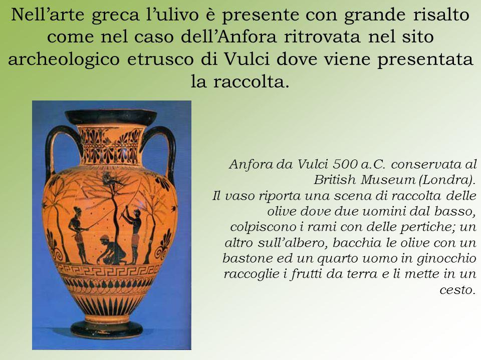 Nell'arte greca l'ulivo è presente con grande risalto come nel caso dell'Anfora ritrovata nel sito archeologico etrusco di Vulci dove viene presentata la raccolta.