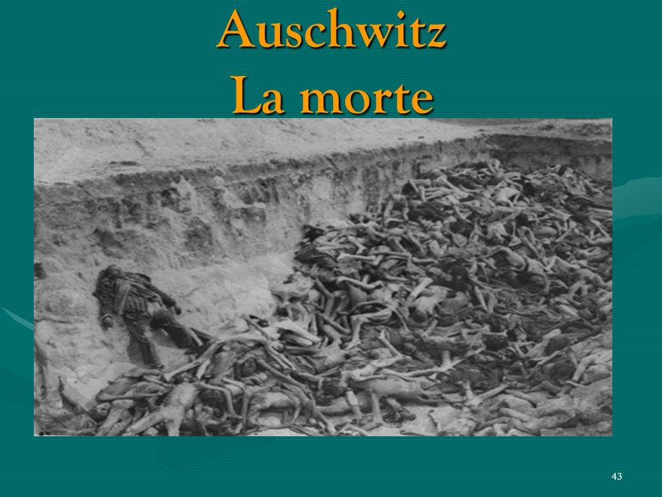 Auschwitz La morte