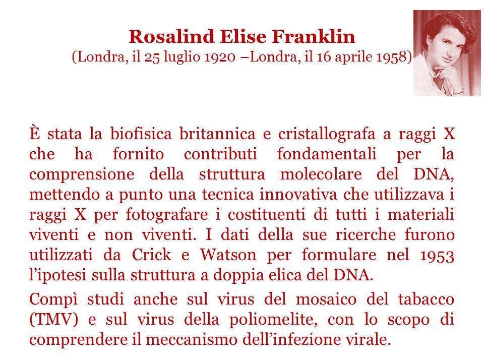 Rosalind Elise Franklin (Londra, il 25 luglio 1920 –Londra, il 16 aprile 1958)