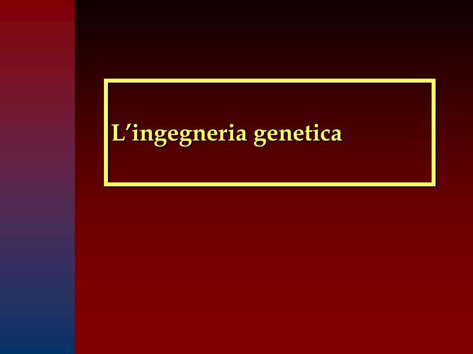 L'ingegneria genetica