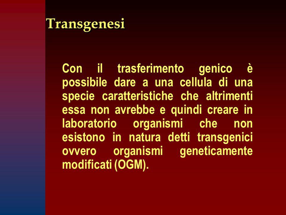 Transgenesi